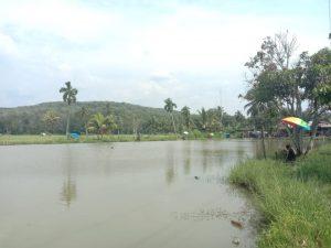 Kolam Ikan di Madina